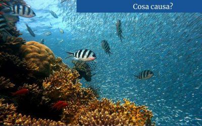 L'influenza dell'acidificazione oceanica sulle nostre vite