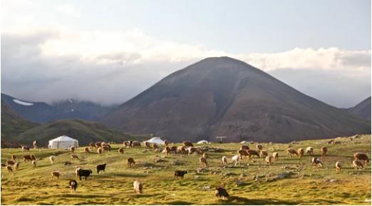 Pastorizia in Mongolia